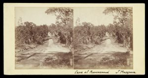 Eight stereoview photographs by the early amateur photographer James Musgrove, Victoria, 1886MUSGROVE, James# 10924