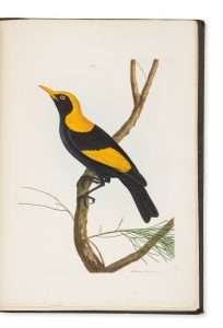 A natural history of the birds of New South Wales, LEWIN, John William (1770 -1819) # 14850