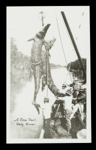 Crocodile hunt, Daly River, Northern Territory, circa 1925