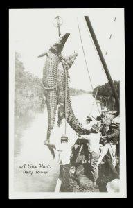 Crocodile hunt, Daly River, Northern Territory, circa 1925Photographer unknown.# 14803