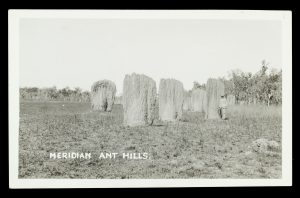 Meridian ant hills, Northern Territory, circa 1925BUSCALL, Jack# 14802