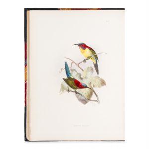 # 15787  SHELLEY, Captain G. E.  A monograph of the nectariinidæ, or family of sun-birds.